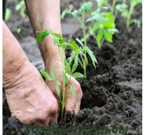 Коли починати садити городину?
