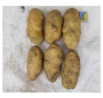 Картопля Кімерія (еліта)