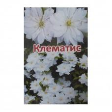 Клематіс Білий
