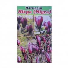 Магнолія Нігра (Nigra)