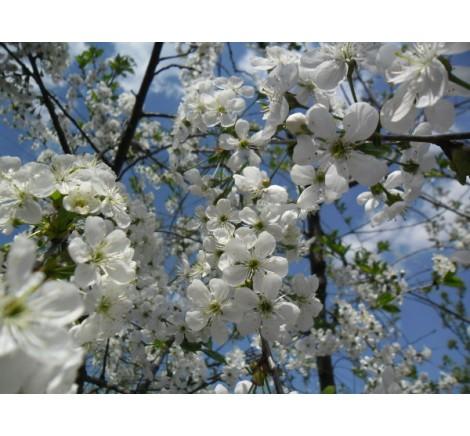 Прийшла весна час обробляти сади